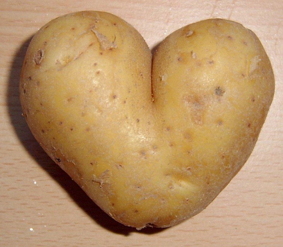 Potato+_51b21d8335ddd6076a9f2e651ccabad8