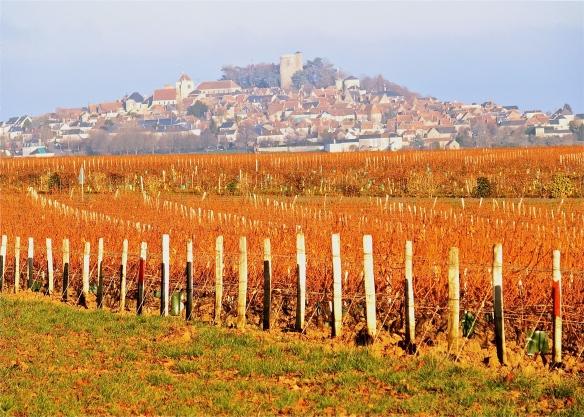 Sancerre in the vines