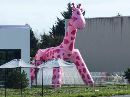 Bouncy Pink Giraffe for the kids.
